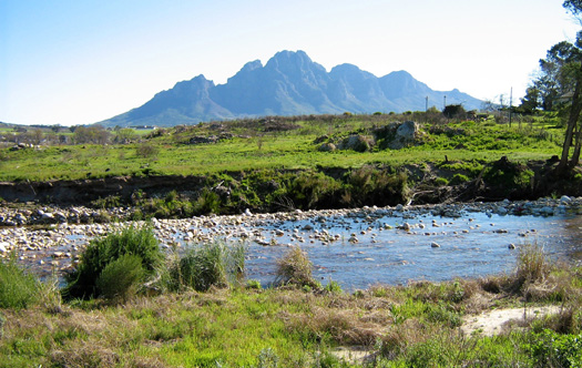 Image of Homestead and Plum Farm - Franschhoek
