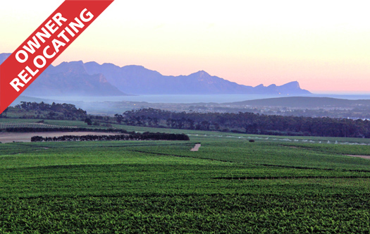 Image 1 for Amani Vineyards - Stellenbosch